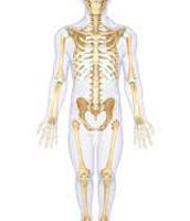 Skeletal:
