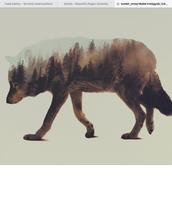 Animal exposure