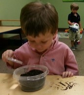 Examining the soil