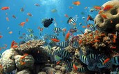 Protect sea