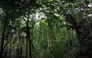 Malaysia's rainforest