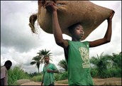 Boys carrying pounds of cocoa beans