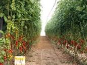 Farming in Israel