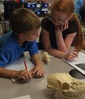 Analyzing MDC Skulls