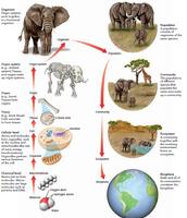 Nivel de organizacion de un elefante