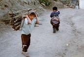 Lumber Child Labourer