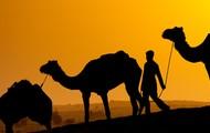 Camel rides anybody?