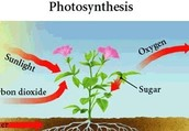 ThisIis The Photosynthesis Formula