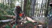 A man cuting a tree.
