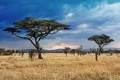 Desert Grassland