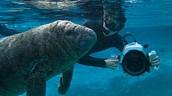 Underwater Filmmaker in action