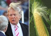 Donald or corn?