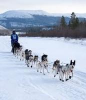 Inuit dog sled