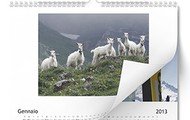 Calendari fotografici