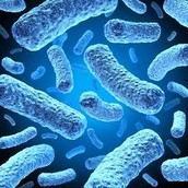 Goodbye Bacteria