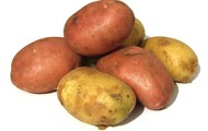 A Heap of Hunted Potatoes