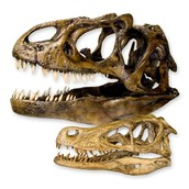 Paleontology Job Offer. Help needed!