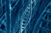 These Genetic Changes Lead to A New Discovery