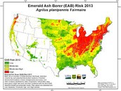 Where was the Emerald Ash Borer last seen ?