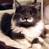 moooostach kitty