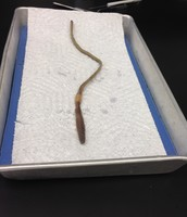 External View of Our Worm