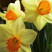 Spring has Sprung, But School is Still In!