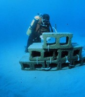 Build Artificial Reefs