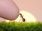 You as an ant.