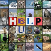 There are many endangered animals in the world