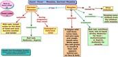 Syptoms/Causes