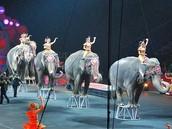 Bad Circuses