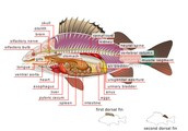 Internal anatomy view