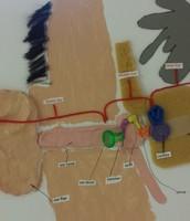 3rd Grade Ear Project