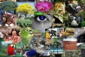 ¿Que ha aportado la Biologia en nuestro entorno?