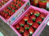 送禮的草莓禮盒