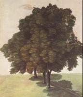 Three Lime Trees (1489)