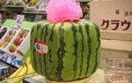 Square Watermeloné