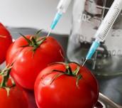 Genetic Engineering on food