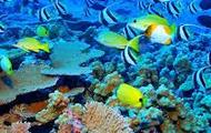1,500 species of fish,