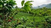 Costa Rica Farm