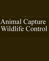 Animal Capture Wildlife Control