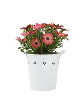 Send Flowers Gifts Online - Green Thumb Gifts