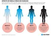 Timeline of Ebola