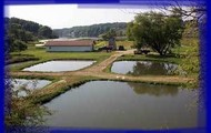 There are many fishing hatchery's around the U.S.