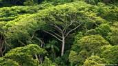 Nestanak prašuma znači i gubitak biljaka i životinja koje u njoj pronalaze dom.