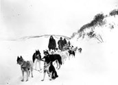 Dog mushing was designated the official state sport of Alaska in 1972