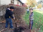 Kids planted golden bulbs