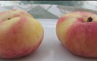 Orbit Fire Peach