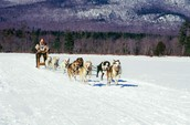 Sleds, Sled Dogs, and Mushers