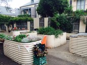 Nicho and BESC's beautiful garden beds helped keep fresh by Ms Miller and the garden club.